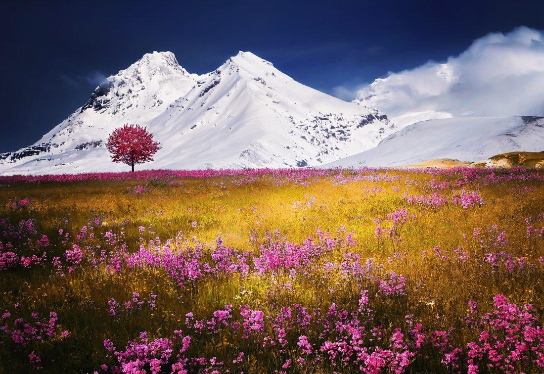 bloom-blossom-field-36032